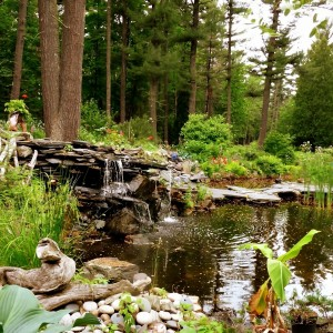 Ogród i Działka (5)